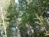 Земельный участок 20 соток (СНТ, ДНП)